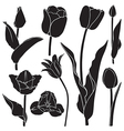 Tulips silhouette set vector image