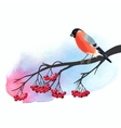 Bullfinch and rowan vector image