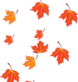 autumn leaves isolated on white vector image