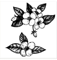 jasmine flowers vector image
