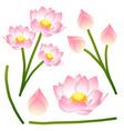nelumbo nucifera - indian lotus sacred lotus vector image