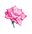 rose flower sketch vector image