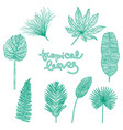 hand drawn botanical vector image