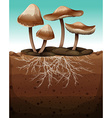 Fresh mushroom with roots underground vector image