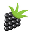 blackberry flat icon fruit and diet vector image