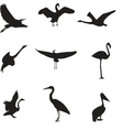 Set of different photographs of birds seamless vector image