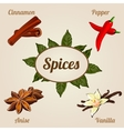 Icons set of four spices with the designation vector image
