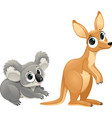 Funny marsupials koala and kangaroo vector image