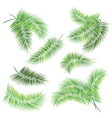 Set of palm tree branches vector image