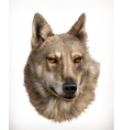 Wolf head realistic vector image