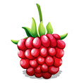 Fresh rasberry with green stem vector image