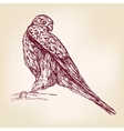 hawk bird of prey - hand drawn llustration vector image