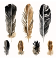Hand drawn watercolor feathers vector image