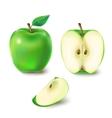 a juicy green apple vector image