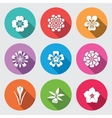 Botany flower set Camomile daisy petunia vector image