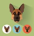 german shepherd portrait with flat design vector image