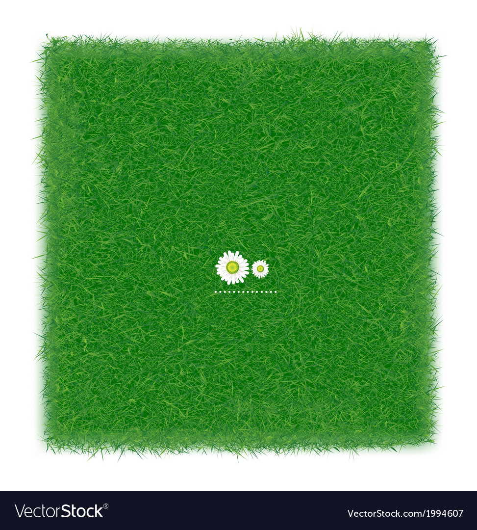 Green grass realistic textured background isolate vector