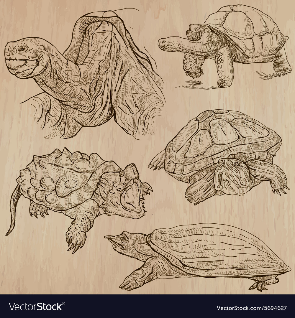 Turtles  an hand drawn pack vector