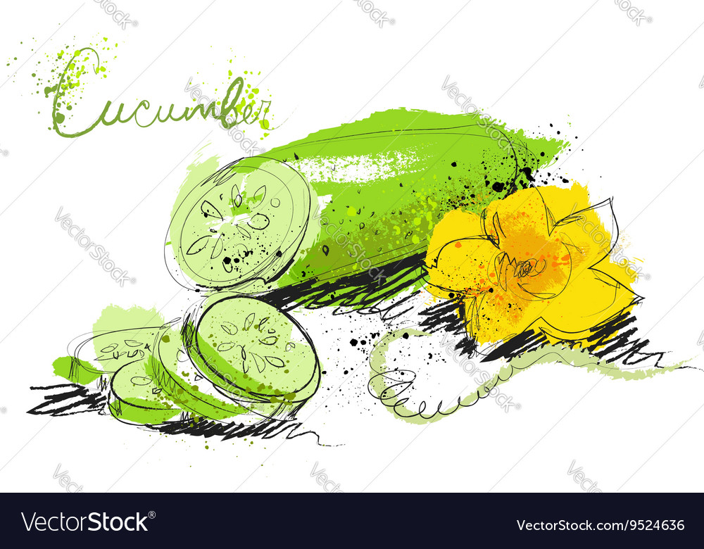 Cucumber slices isolated on white background art vector