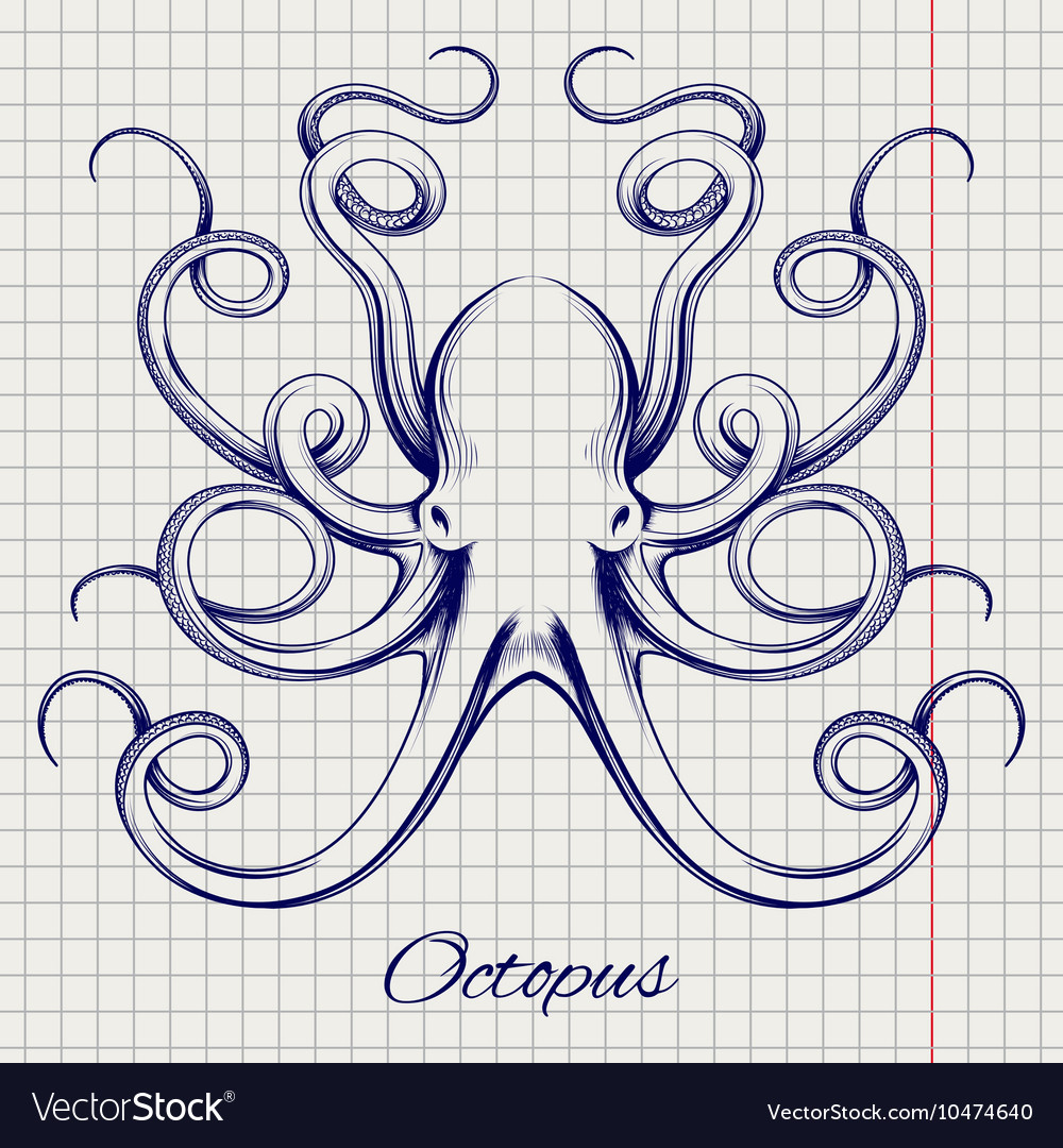 Hand drawn pen sketch octopus vector