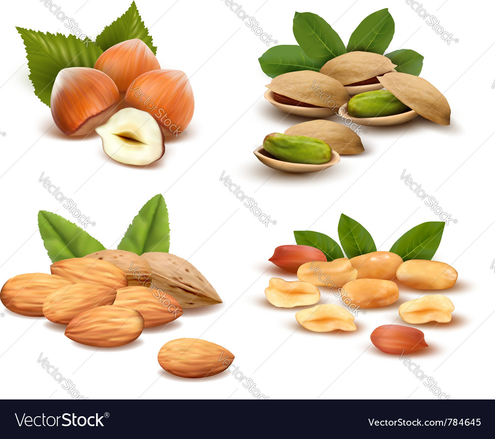 Ripe nuts collection vector