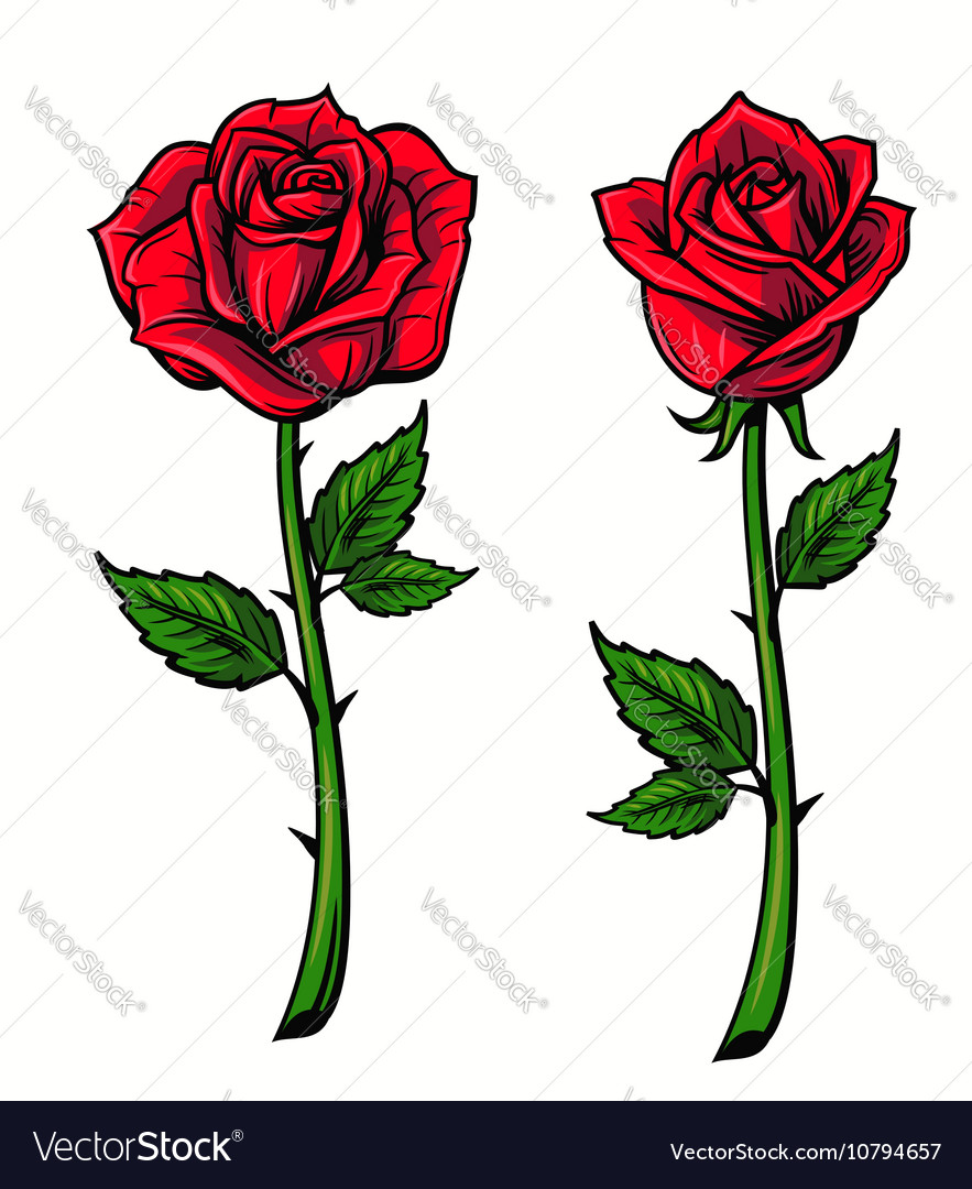 Red rose cartoon vector