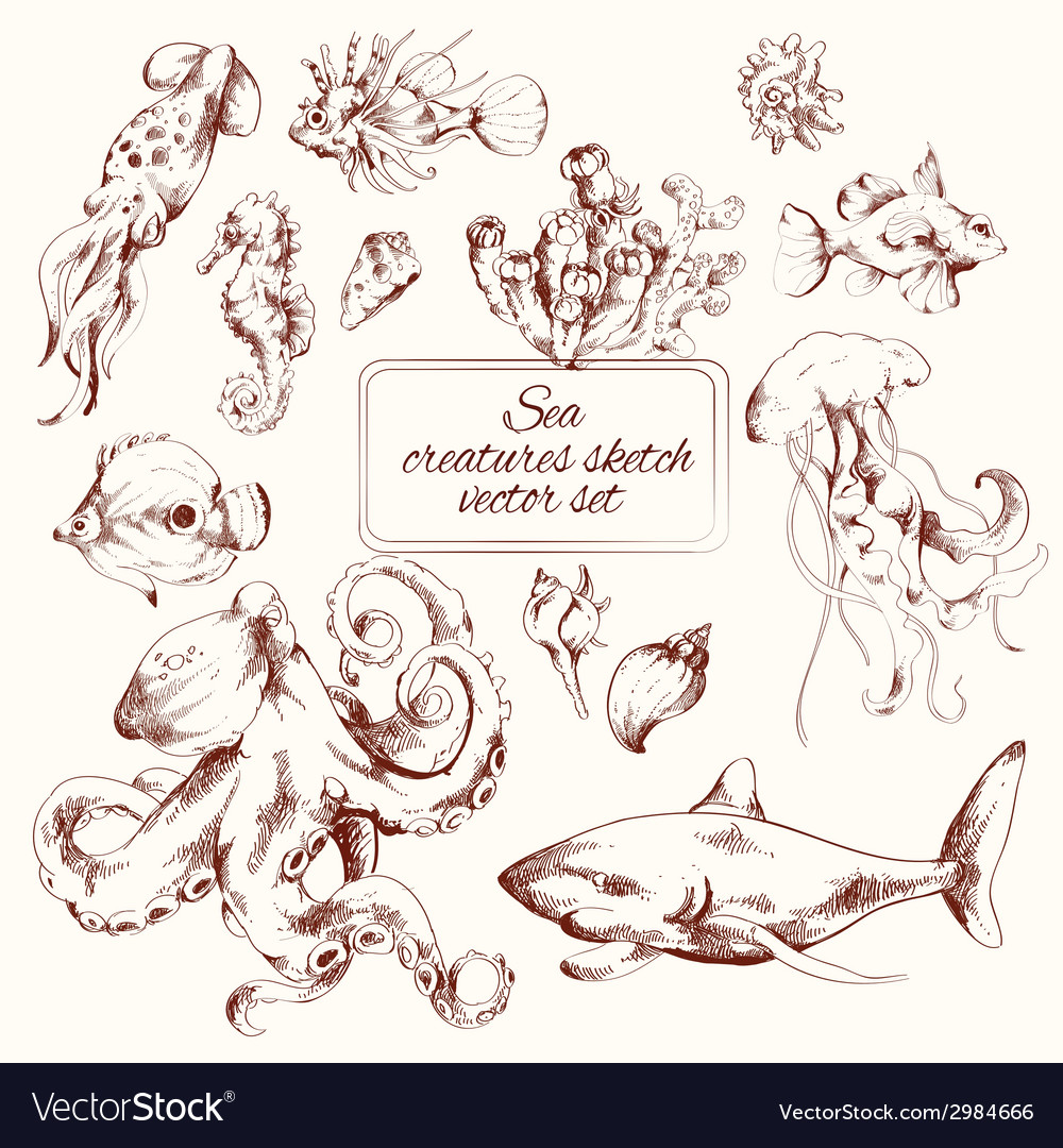 Sea creatures sketch vector