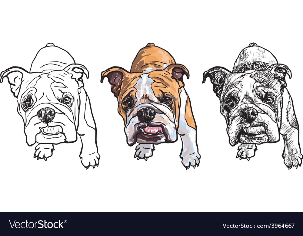 Young bulldog vector