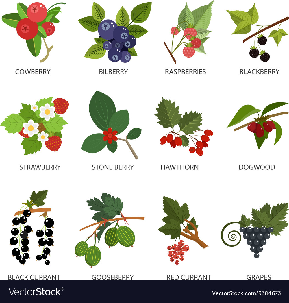 Set of berries design elements in flat vector