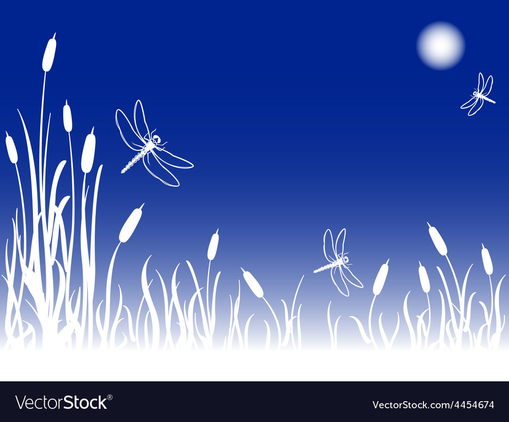 Foggy marsh with dragonflies vector