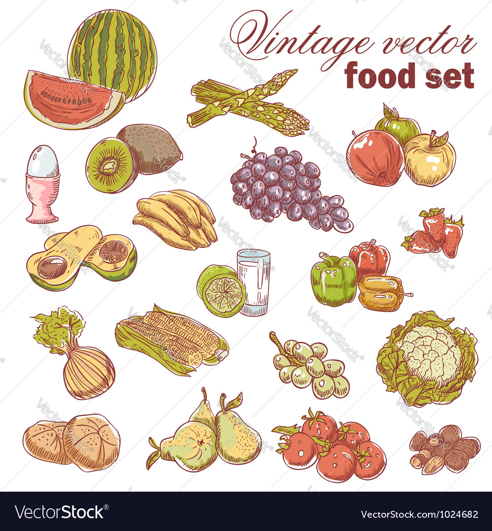Vintage handdrawn food set vector