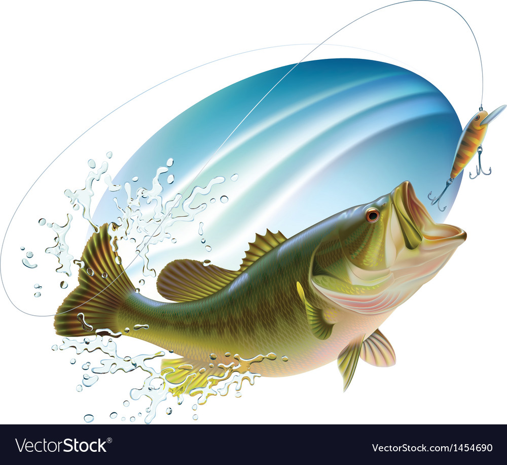 Largemouth bass catching bite vector