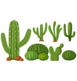 different types of cactus plants vector image vector image