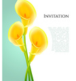 Invitation with callas flowers vector image vector image