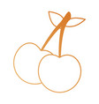 cherry fresh isolated icon vector image