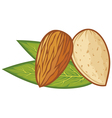 almond with leaves vector image vector image