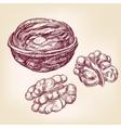 walnuts hand drawn llustration realistic vector image vector image