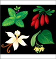 Set of aromatic plants vector image