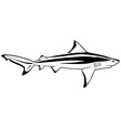 Bull Shark vector image vector image