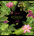 tropical flowers frame vector image