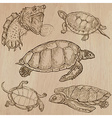 Turtles - An hand drawn pack vector image