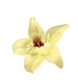 vanilla flower isolated vector image