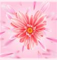 gerbera flower heart card vector image
