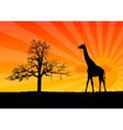 giraffe sunrise vector image