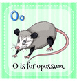 Flashcard letter O is for opossum vector image