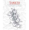 Cherry Tomatoes vector image