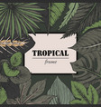 template with frame of hand drawn tropical vector image vector image