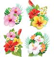 Arrangement from hibiscus flowers vector image vector image