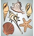 Shells2 vector image