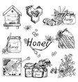 background wallpaper sketch style honey vector image